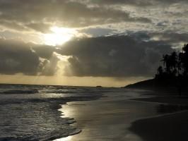 sun palms water sea